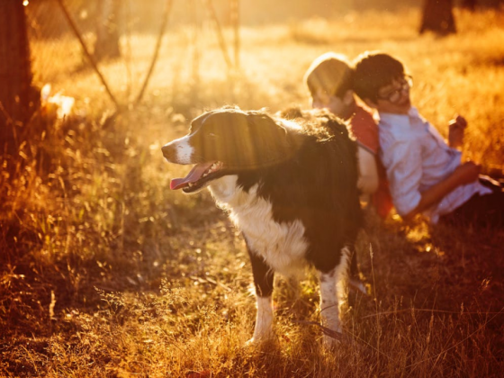 Best Reasons To Adopt A Pet