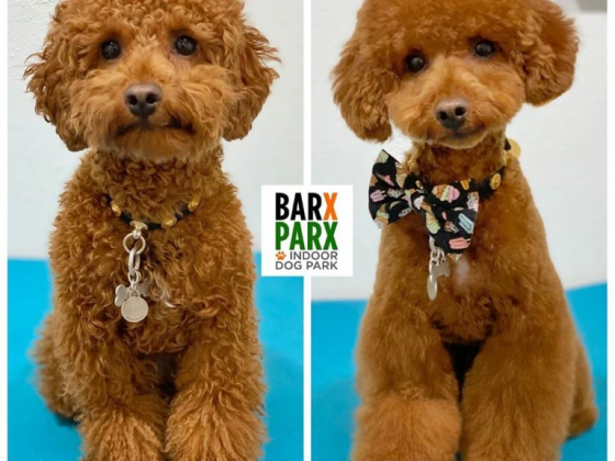 Barx Parx extends exceptional service to grooming