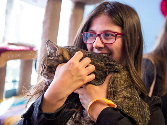 UNLV grad to open Nevada's first cat cafe in Las Vegas