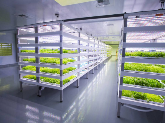New plant factory to supply Las Vegas Strip with fresh produce